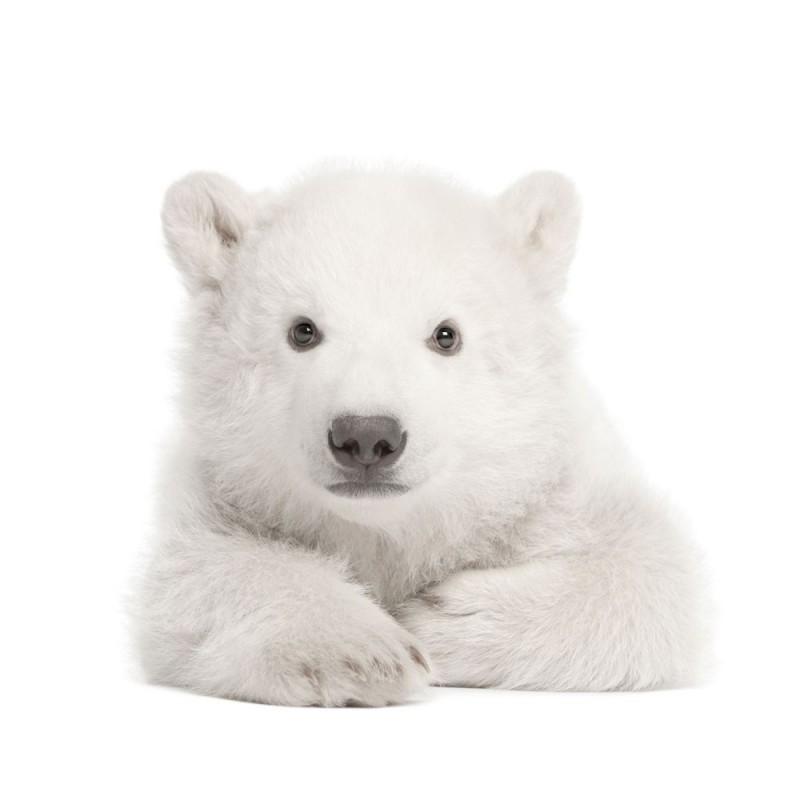 Miś Polarny plakat dla dzieci 100x70cm, Dekornik