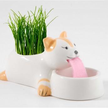 Kot doniczka samonawadniająca z nasionami trawy, Radis et Capucine