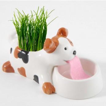 Pies doniczka samonawadniająca z nasionami trawy, Radis et Capucine