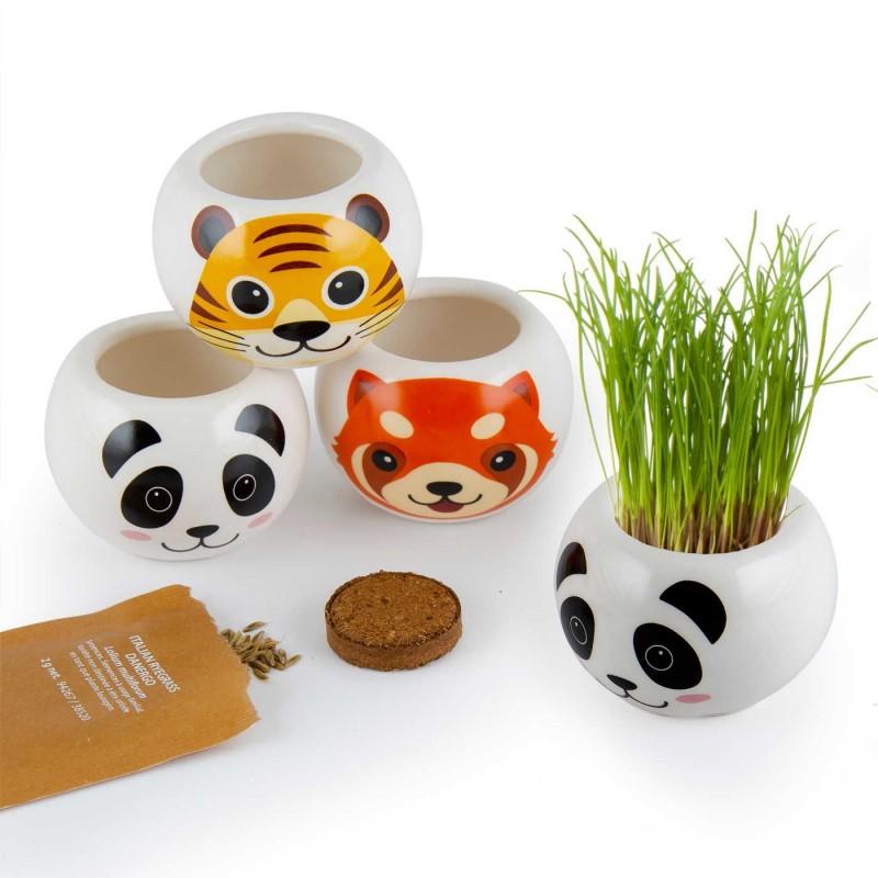 Panda, doniczka z nasionami trawy dla dzieci od 3 lat, Radis Et Capucine