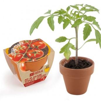 Zestaw do uprawy Bio Pomidorki Koktajlowe dla dzieci, Radis et Capucine