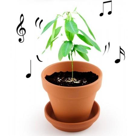 Tańcząca Roślina zestaw do uprawy dla dzieci +6 lat   Dadum