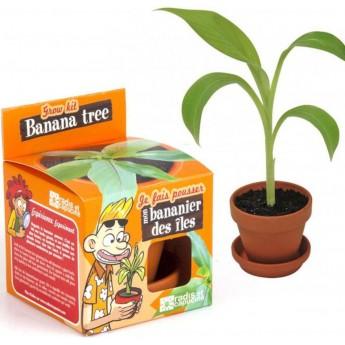 Mini Bananowiec zestaw do uprawy dla dzieci od 6 lat   Dadum
