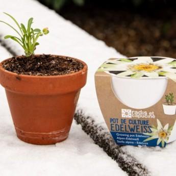 Edelweiss nasiona w doniczce, Radis et Capucine